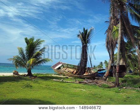 old abandoned wooden boat on beach shore with tree growing through floor Big Corn Island Nicaragua Central America