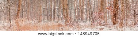 Forest At Wintertime In Denmark