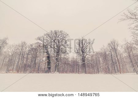 Trees In A Winter Landscape