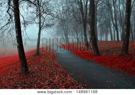 Autumn colorful park.Autumn landscape of foggy autumn park with red fallen autumn leaves.Autumn alley in the fog-gothic autumn landscape in cloudy weather with bare red autumn trees along autumn alley