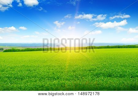 green field, sun rise and blue sky