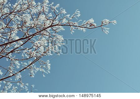 Winter landscape - frosty winter branches closeup view. Snowy winter tree branches against the sky - winter nature view. Winter background with free space for text in pastel tones