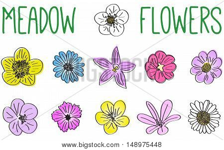 set of vector meadow flowers hand drawn bloom flowers isolated on white background