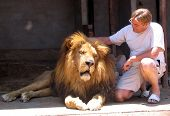 Domesticated lion enjoying the attention and hugs of a man poster