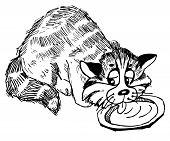 Cat eats milk, sketch, line drawing, vector poster