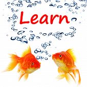 learn word with goldfish showing education concept in white background poster