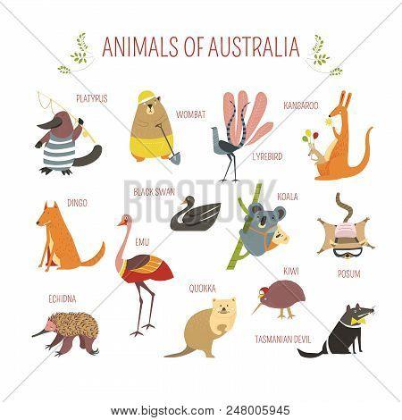 Cartoon Australian Animals And Birds For Kids Design. Vector Funny Zoo Of Kangaroo, Koala Or Emu Ost