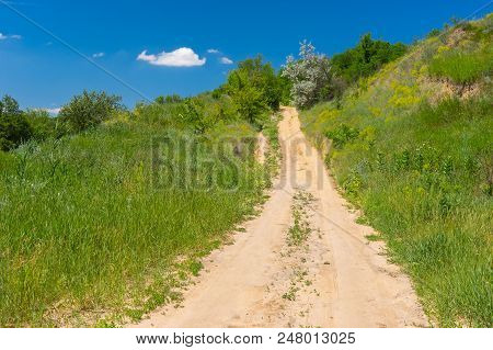 Summer Landscape With Sandy Road Through Overgrown Ravine
