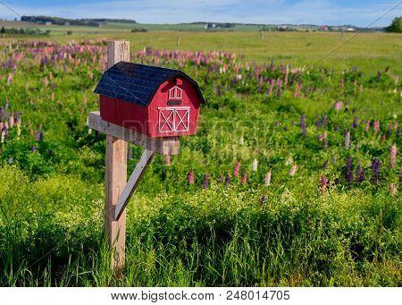 Mailbox amid a field of wild lupins in rural Prince Edward Island, Canada.