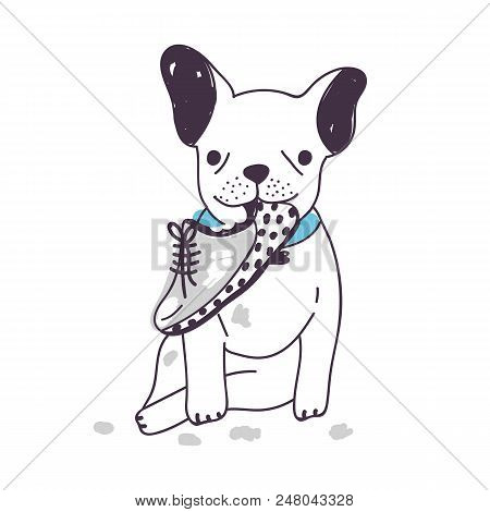 Amusing Dog Sitting And Chewing Or Gnawing Shoe. Funny Naughty Puppy Isolated On White Background. B