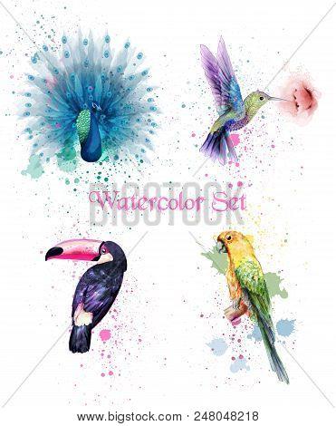 Watercolor Birds Set Vector. Peacock, Parrot, Humming Bird Illustration