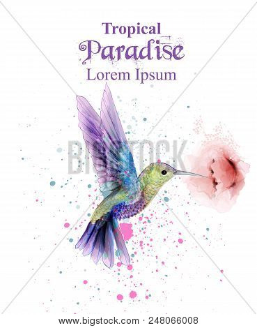 Watercolor Humming Bird Vector. Tropic Paradise Colorful Bird. Colorful Paint Stains Splash