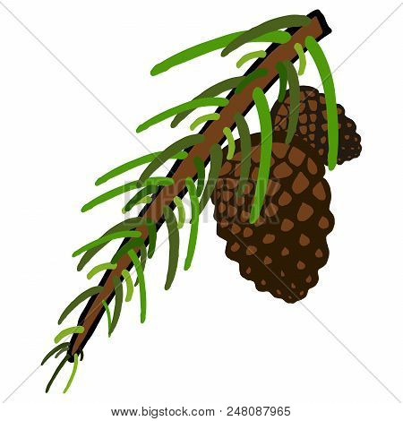 Pine Cone And Fir Tree. Coniferous Branch With Cones. Vector Illustration Of A Branch Of Spruce With