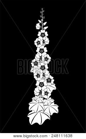 Mallow Flower. Black And White Vector Illustration