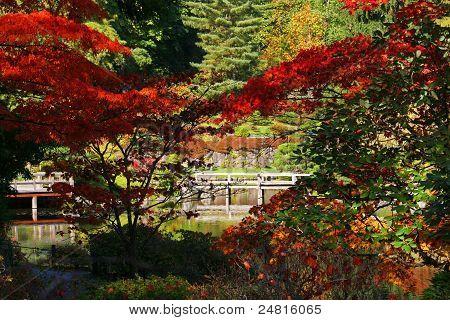Arboretum,Japanese Garden #4