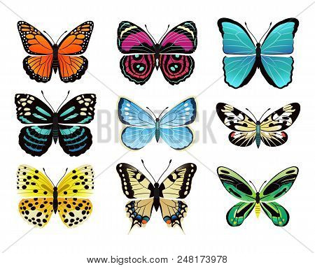 Butterflies Types Collection With Colorful Wings, Antennas And Heads Papilionidae Set Of Butterflies