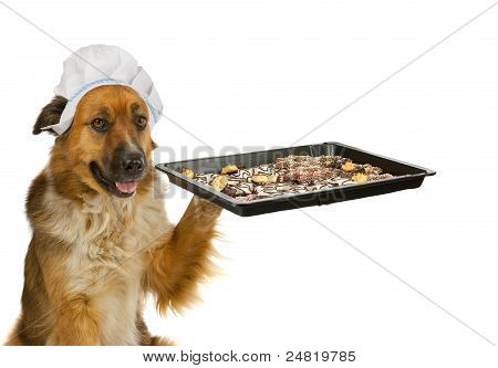 Dog with a chef?s hat is offering christmas cakes poster