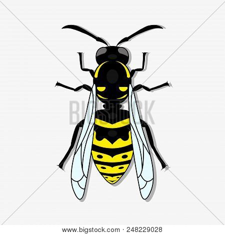 Yellow-black Wasp. A Stinging Insect, An Insect Pest. Flat Design. Vector Illustrator. Eps10