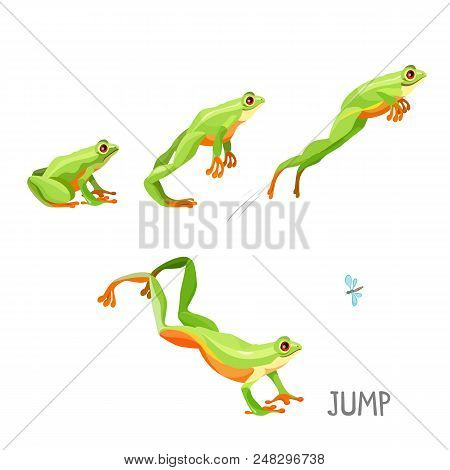 Bright Colored Frog Jumping Cartoon Vector Illustration. Steps Of Anuran Jump Sitting And Moving Up,