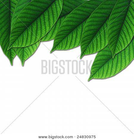 beautiful lush green leaf