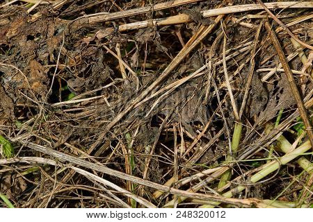 Vegetative Natural Texture Of Dry Grass And Leaves On The Ground