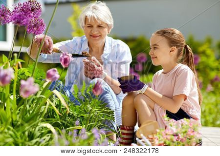 gardening, family and people concept - happy grandmother and granddaughter planting flowers at summer garden poster