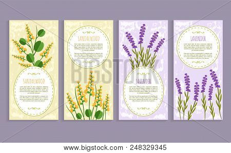 Sandalwood And Lavender Set Of Covers With Text Samples And Headlines, Herbs Set Aromatic Herbs Vect