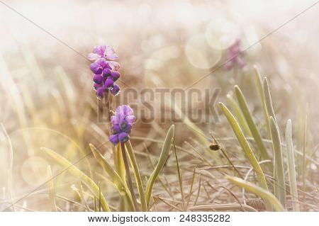 Wild Nature Flowers Background. Wild Purple Flowers Background. Close Up Of Purple Forest Flowers.mo
