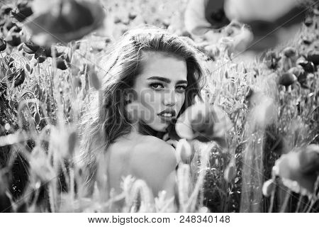 feminine purity. love intoxication. poppy seed and girl with long curly hair in red flower field with green stem on natural background, summer, spring, drug and opium poster