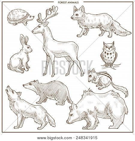Forest Animals And Birds Sketch. Vector Isolated Bear, Wolf Or Fox And Wild Bear, Owl Or Hedgehog An
