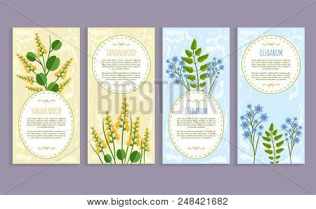 Olibanum And Sandalwood Set Of Covers With Text Sample And Headline, Herbs Collection, Olibanum And