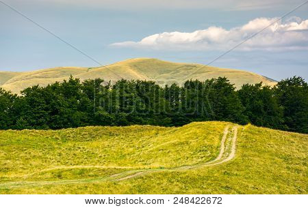 Dirt Road Uphill In To The Beech Forest. Beautiful Mountainous Landscape In Summer. Location Svydove