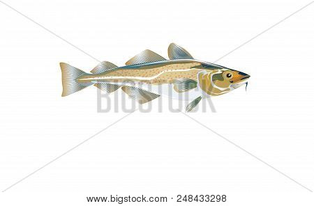 Codfish. Cod Atlantic, Vector Illustration With Details And Optimized Specks To Be Used In Packaging