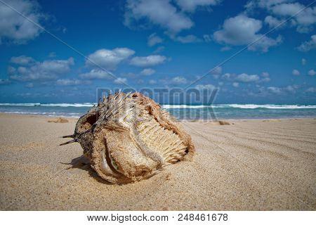 Island Boa Vista in Cape Verde, landscape - seaside poster