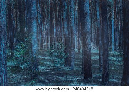 Terrible And Mysterious Night Forest Fascinates With Its Beauty No One Around Only Plants And Wilder