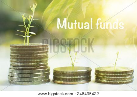 Coin With Tree In Mutual Funds  Business Concept.