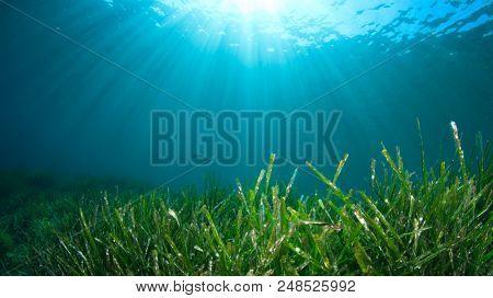 Seagrass underwater background
