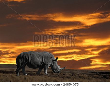 Rhinoseros With Sunset Sky
