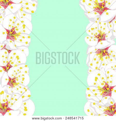 White Plum Blossom Flower Border Isolated On Green Mint Background. Vector Illustration.