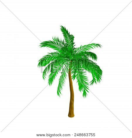 Palm Tree. Isolated On White Background. 3d Vector Illustration. Isometric View.