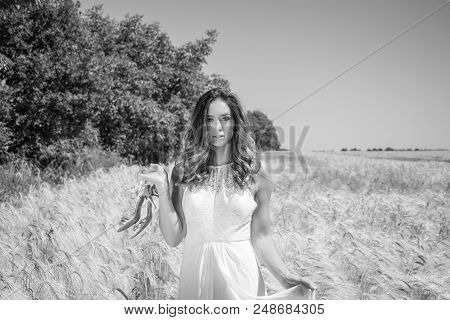 Beautiful Woman, Bride Walked Through Corn Field Holding Silver Shoes On A Sunny Summer's Day