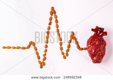 Healthy Food, Heart Model And Almond Cardiogram. Medical Abstract Concept