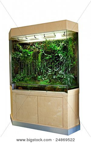 terrarium or vivarium for keeping rainforest animal such as poison frog and lizards. Glass habitat pet tank with green moss and jungle vegetation. Tropical animal cage. poster