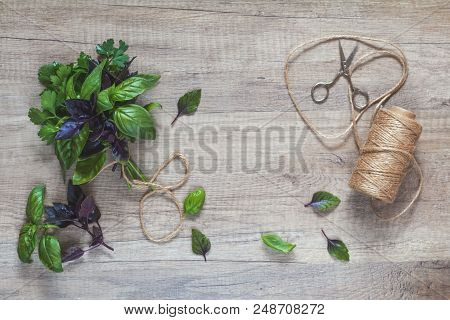 Parsley And Basil Bunch Of Bouquets, Scissors And Rope Cord On Light Wooden Surface. Top View, Copy