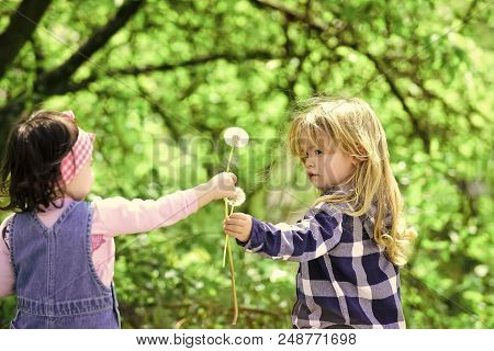 Children's Friendship. Boy Give Dandelion Flower For Girl
