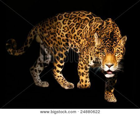 Angry Panther - Spotted Wild Cat