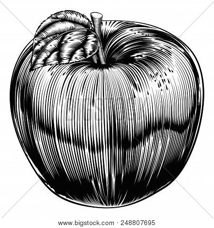 An Original Illustration Of A Apple Fruit In A Vintage Woodcut Or Woodblock Style