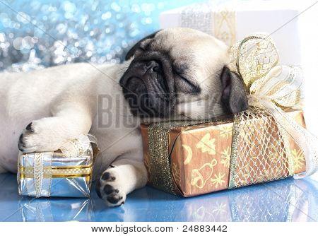 sleeping  puppy pug and gifts christmas