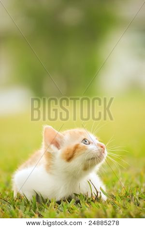 A beautiful Kitten in a green background poster