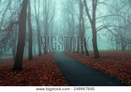 Autumn Nature - Misty Autumn View Of Autumn Park Alley In Dense Fog. Autumn Landscape Scene - Lonely
